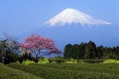 snow-covered Mount Fuji, Honshu Island, Japan