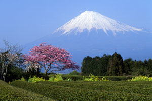 snow-covered Mount Fuji, Honshu Island, Japan
